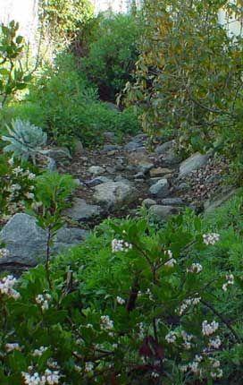 California Native Landscape Dry Creek Bed California Native