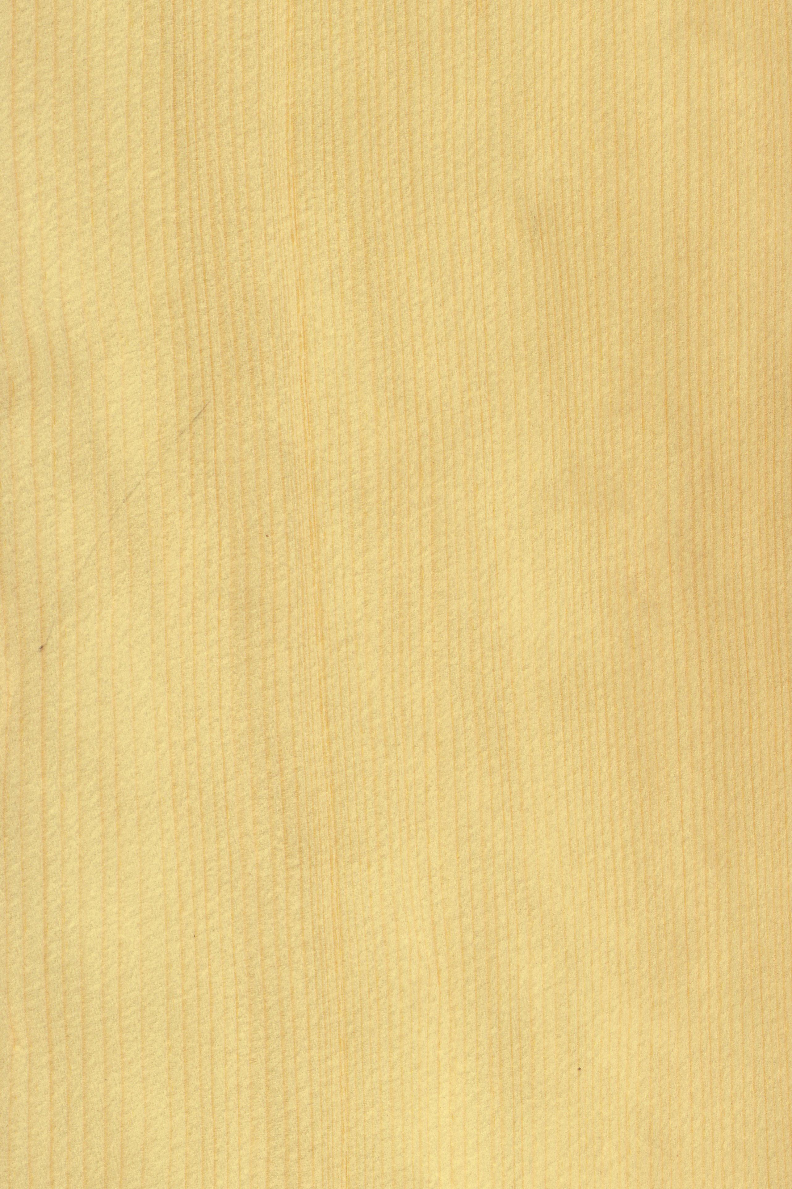 Fichte   Furnier: Holzart, Fichte, Blatt, Hell, Nadelholz #Holzarten