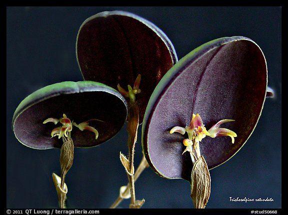 Una especie de orquídea