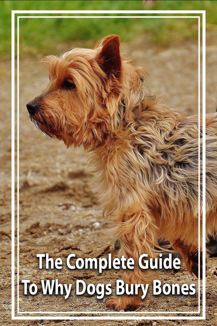 Why Do Dogs Bury Bones? | Dogs, Dog info