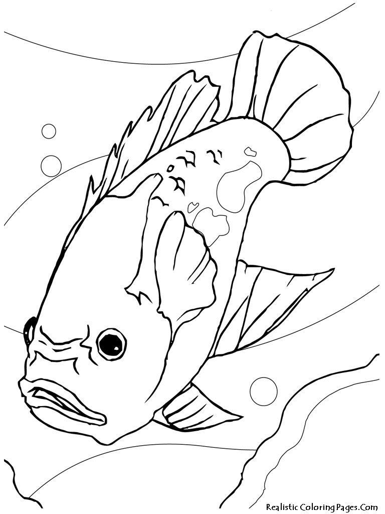 Gambar ikan hias Oscar
