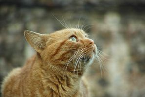 Stock Market Assented Stock Cats, Cat breeds, Beautiful
