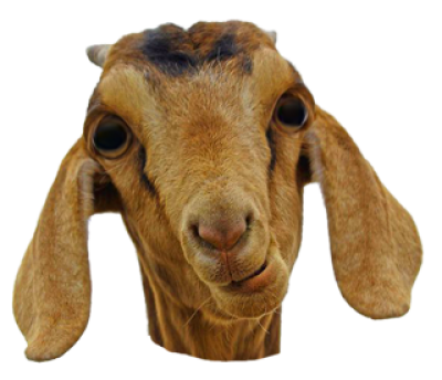 Goat Face Png Free Goat Face Png Transparent Images 34781 Pngio Goats Png Free Png