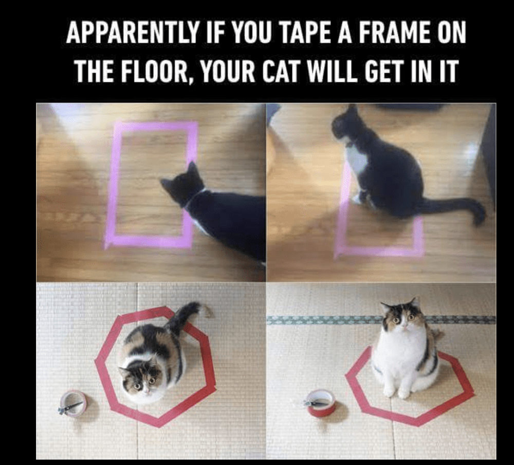 41 Adorable Caturday Memes That Are Sure To Get You Purring