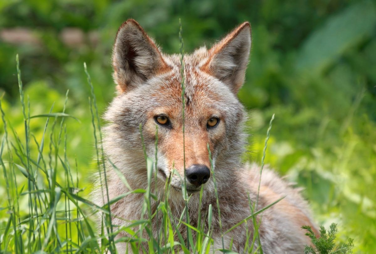 Coexisting With Wildlife How to Keep Pets Safe From