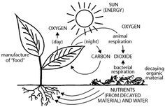 Carbon Dioxide And Oxygen Cycle Worksheets For Kids Explore The