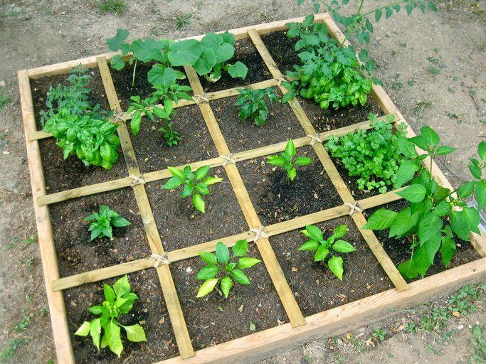 How To Plan A Square Foot Vegetable Garden The Easiest Way To Grow Abundant Veg Square Foot Gardening Layout Square Foot Gardening Vegetable Garden Raised Beds