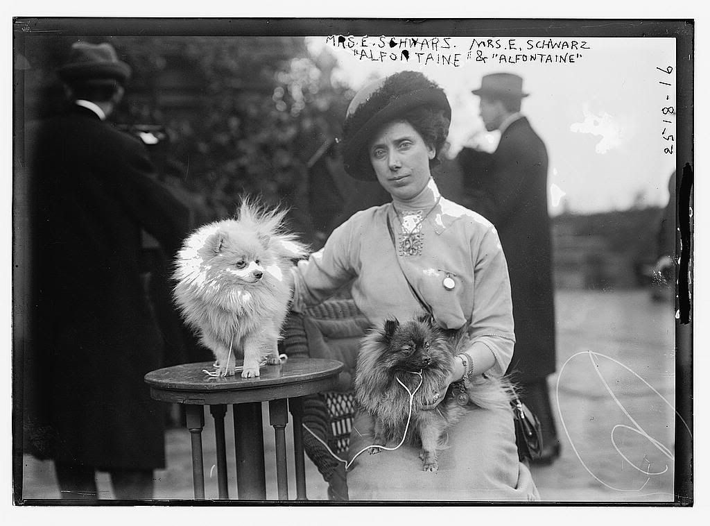 A Lady With Her Pair Of Pomeranians 1910 Pomeranian Vintage