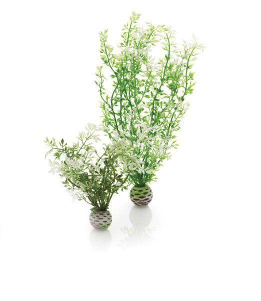 biOrb Winter Flower Plants, 2 Plants