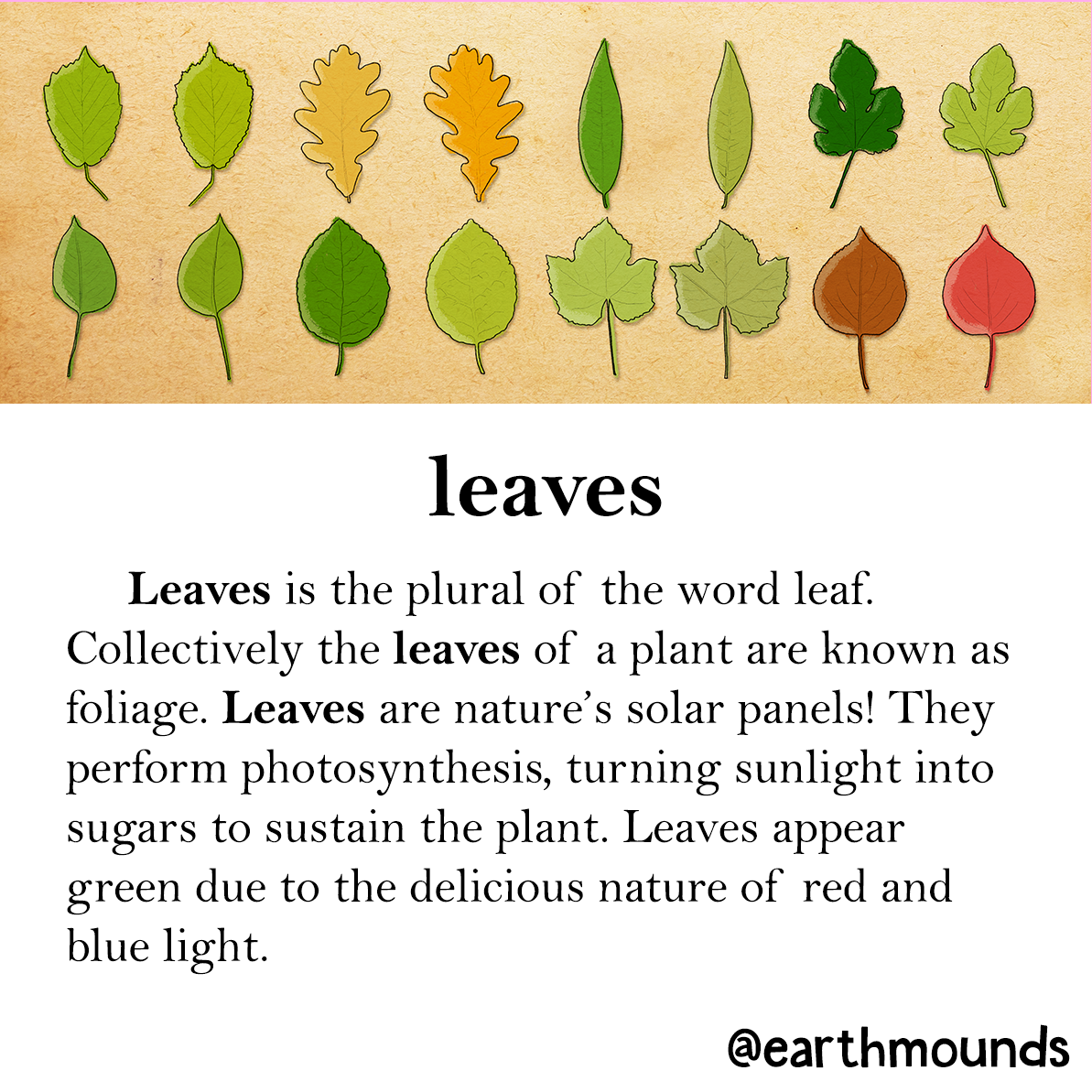 Make Like A Tree And Grow While Helping Others Around You As Well Earthmounds Leaves Learning Leaf Education Autumn Trees Learn Fall