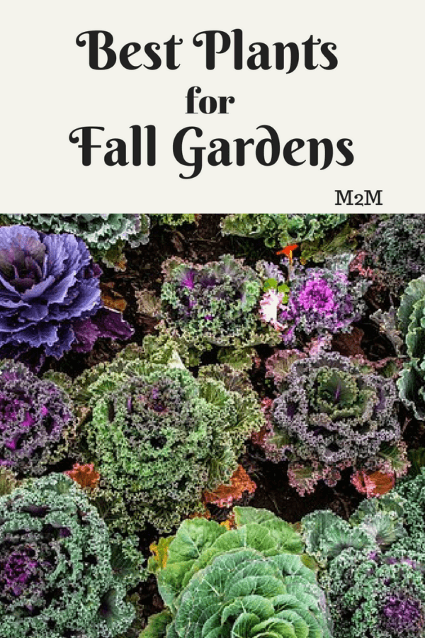Best Vegetable Plants For Fall Gardens Planting 400 x 300