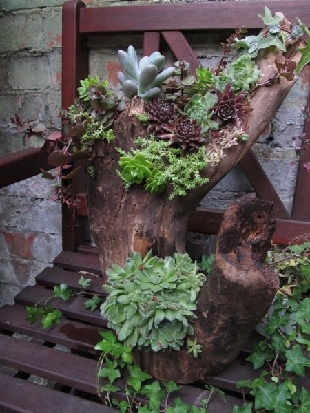 Succulents In Driftwood / Magic Garden