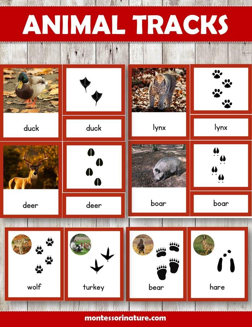 Animal Tracks Montessori Three Part Cards Autumn Themed Animal Tracks Montessori Activities Animal Lessons [ 1056 x 816 Pixel ]