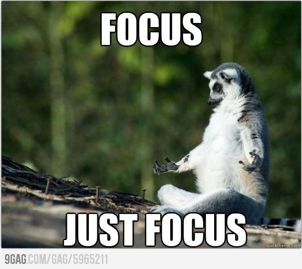 Focus.. just focus.. | Thought process, Humor and Study meme