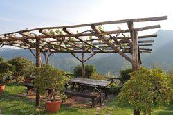 Weinlaube bauen – Tipps für Aufbau und Pflege