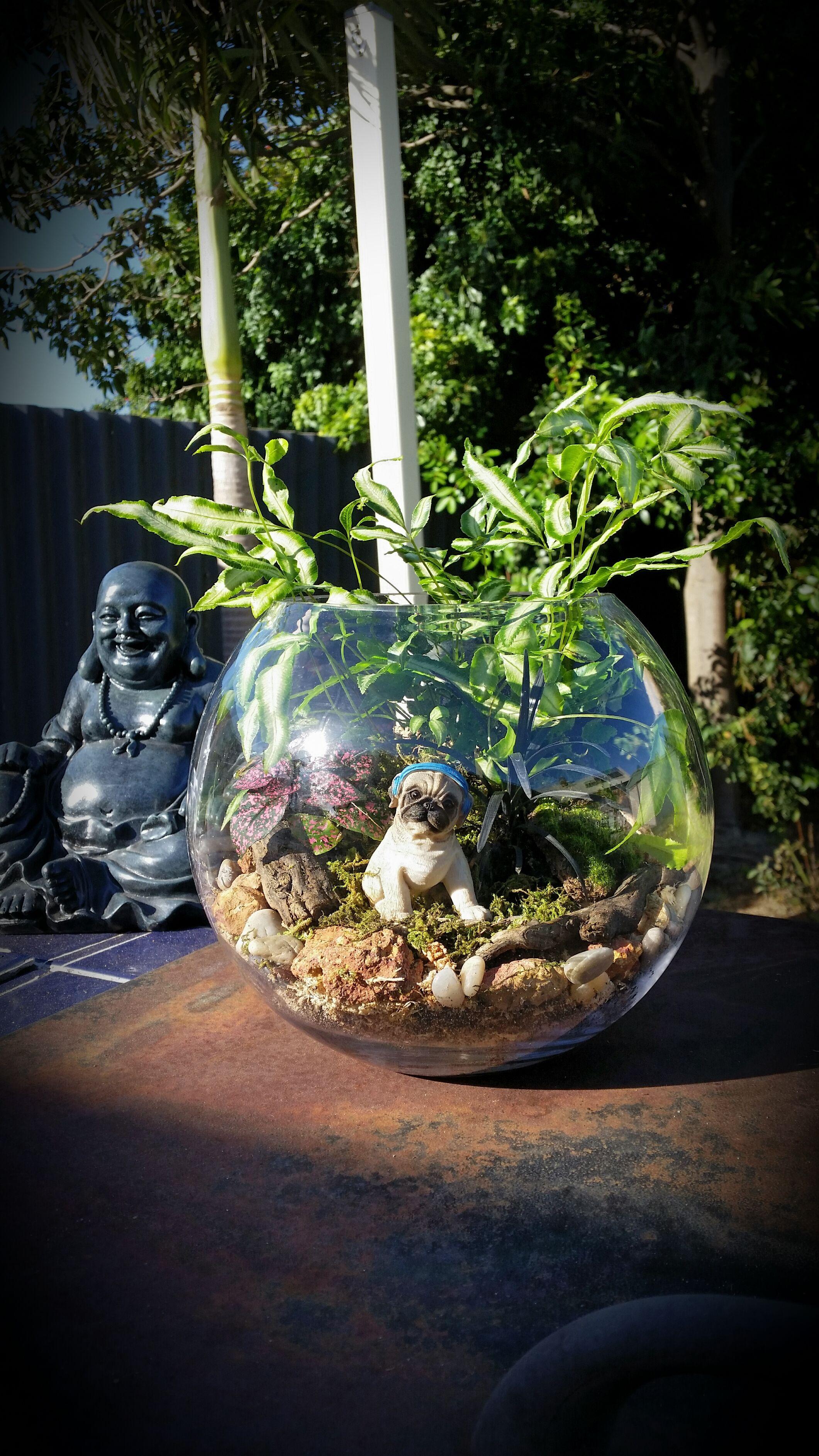 Pug Dog Terrarium By Kristina Barton Perth Diy Pinterest