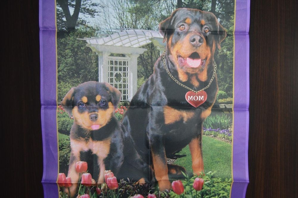 Pin By Gulfstream Guardian Angels Rottweiler Rescue On Pets