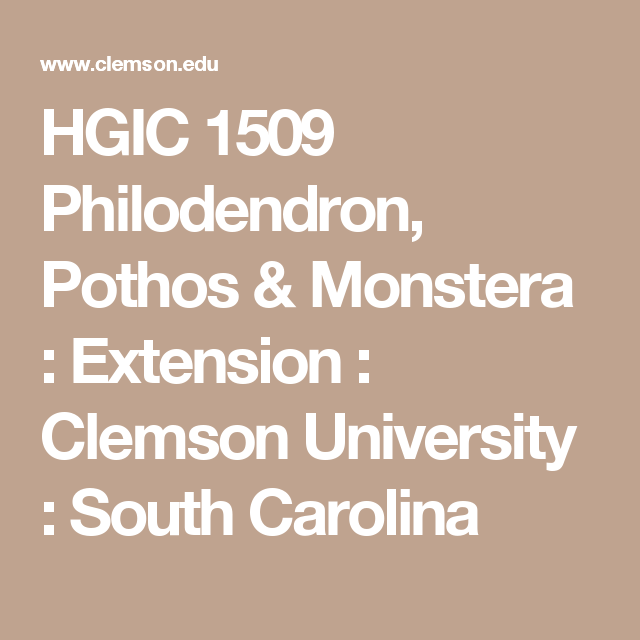 HGIC 1509 Philodendron, Pothos & Monstera : Extension : Clemson University : South Carolina