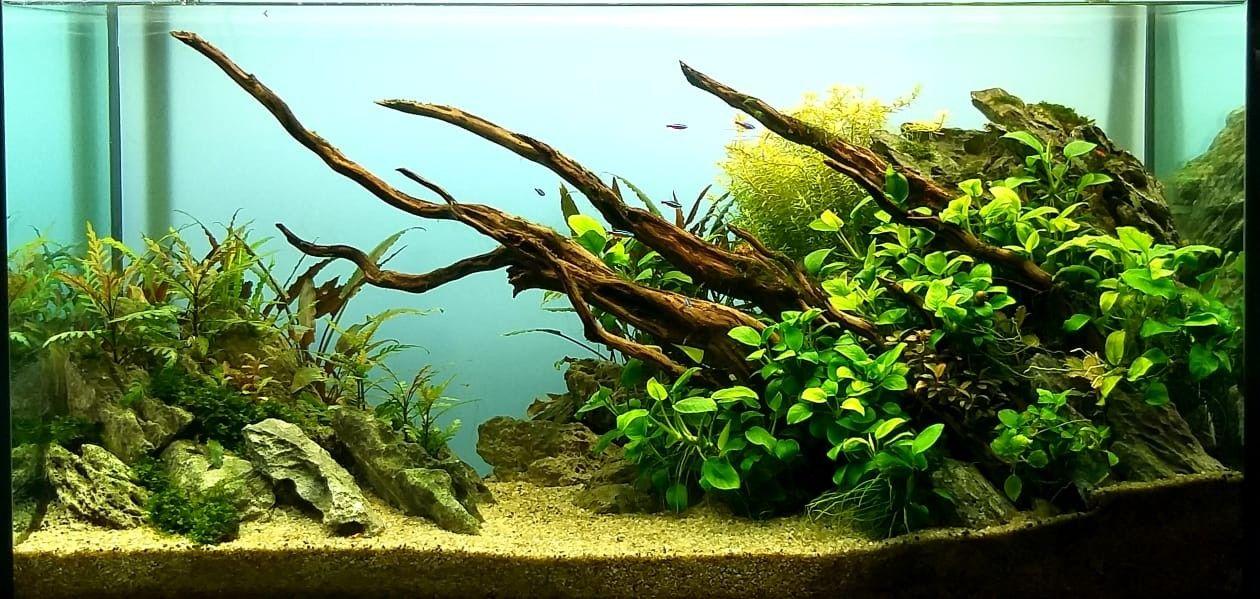Lampu Aquarium Mini 5 Watt - LAMPURABI