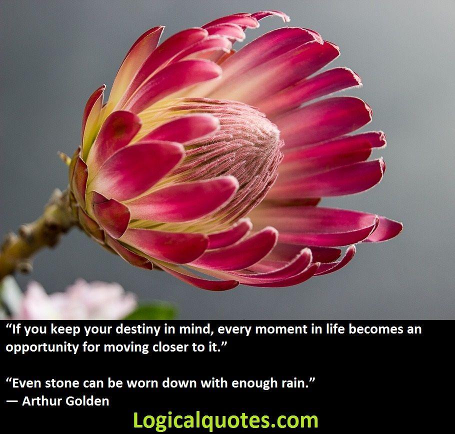 Inspirational Arthur Golden Quotes Protea Flower Plants Flowers