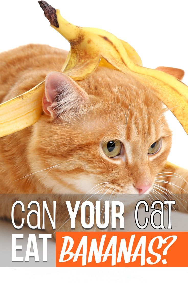 Can your cat eat bananas? Cats, What cats can eat, Cat care