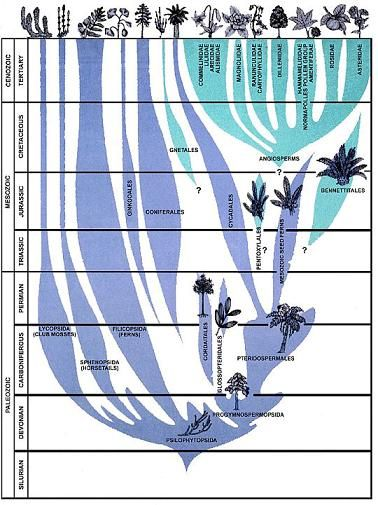 plant evolution diagram - Google Search   Drzewo   Pinterest ...