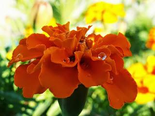 صور ورود 2020 اجمل صور زهور احلى صور ورود جميلة زينه Flower Images Free Beautiful Flowers Images Flower Images