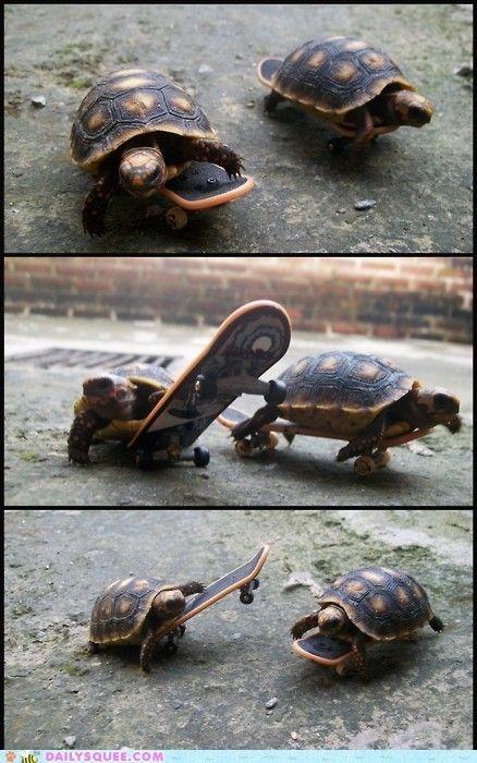 Cool !!! | Cool Pics | Смешные фотографии животных ...