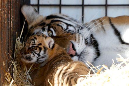 Pocas veces podremos ver ya una imagen como ésta. O por lo menos en Malta. El país introducirá la prohibición de circos con animales a partir de 2014.