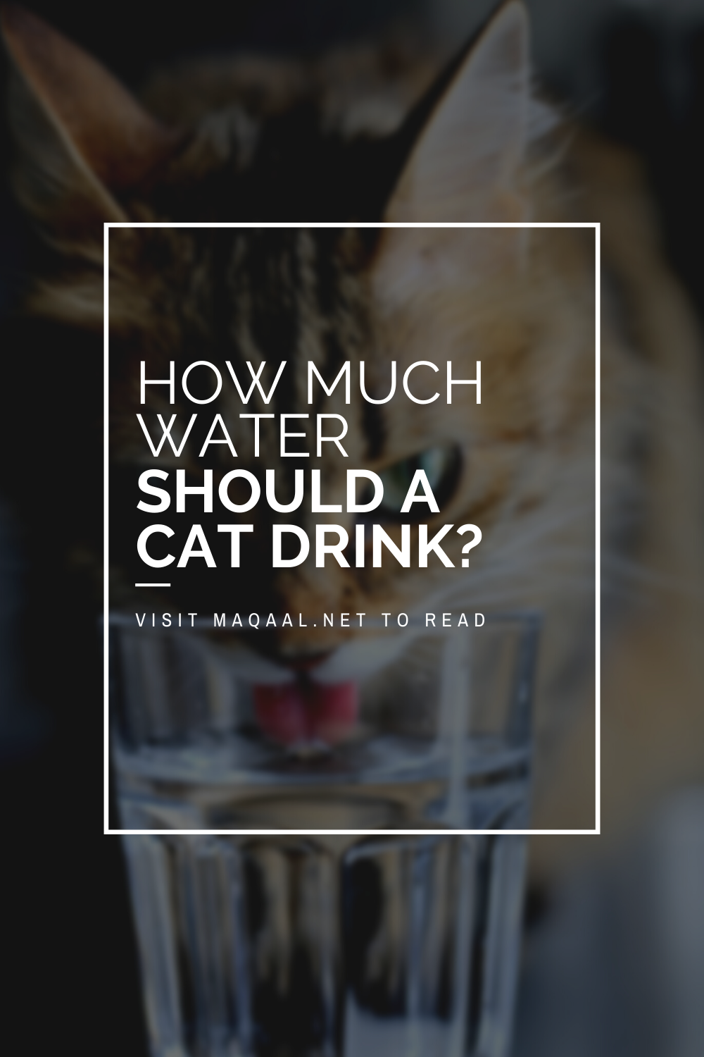 My Cat Won't Drink How Much Water Cats Need. What does it