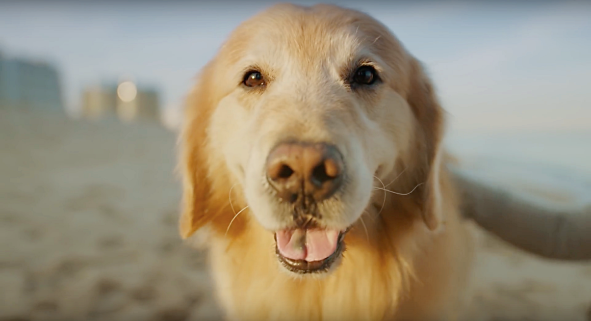 Dog Owner Buys 6 Million Superbowl Ad To Thank His Vet For Saving His Dog S Life In 2020 Dog Owners Lucky Dog Golden Retriever