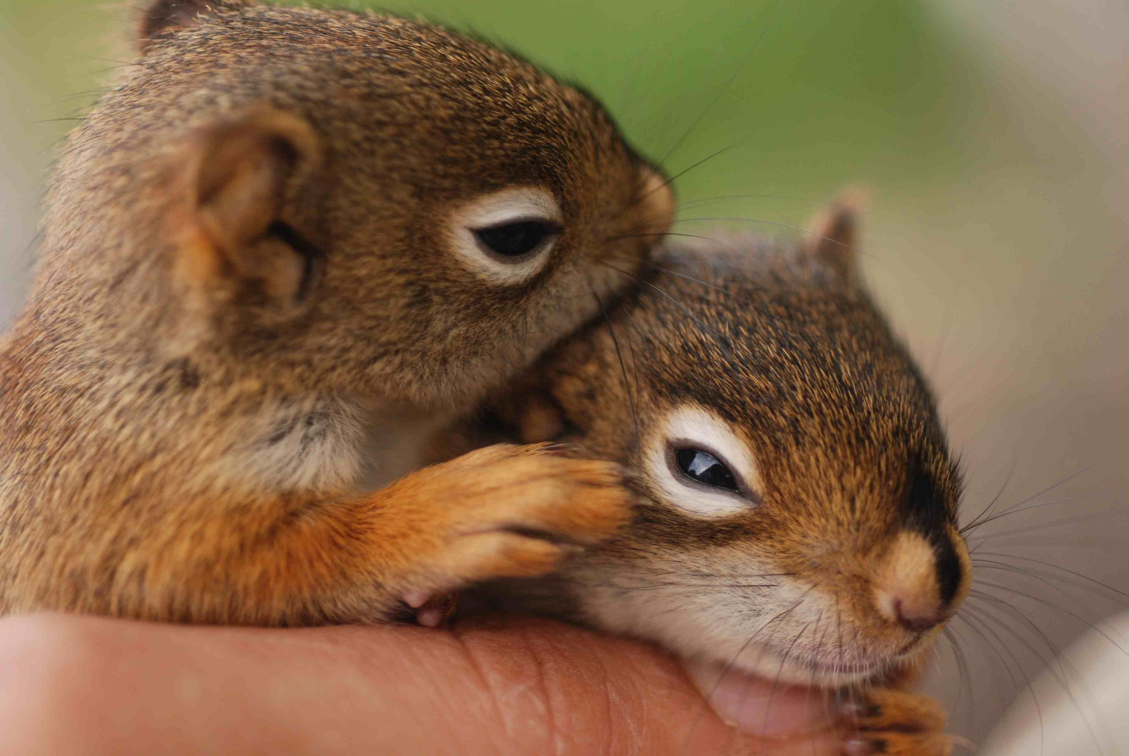 Cute Squirrels will still be room for cute baby