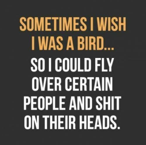 life quote, bird quote, best quote, motivational quote