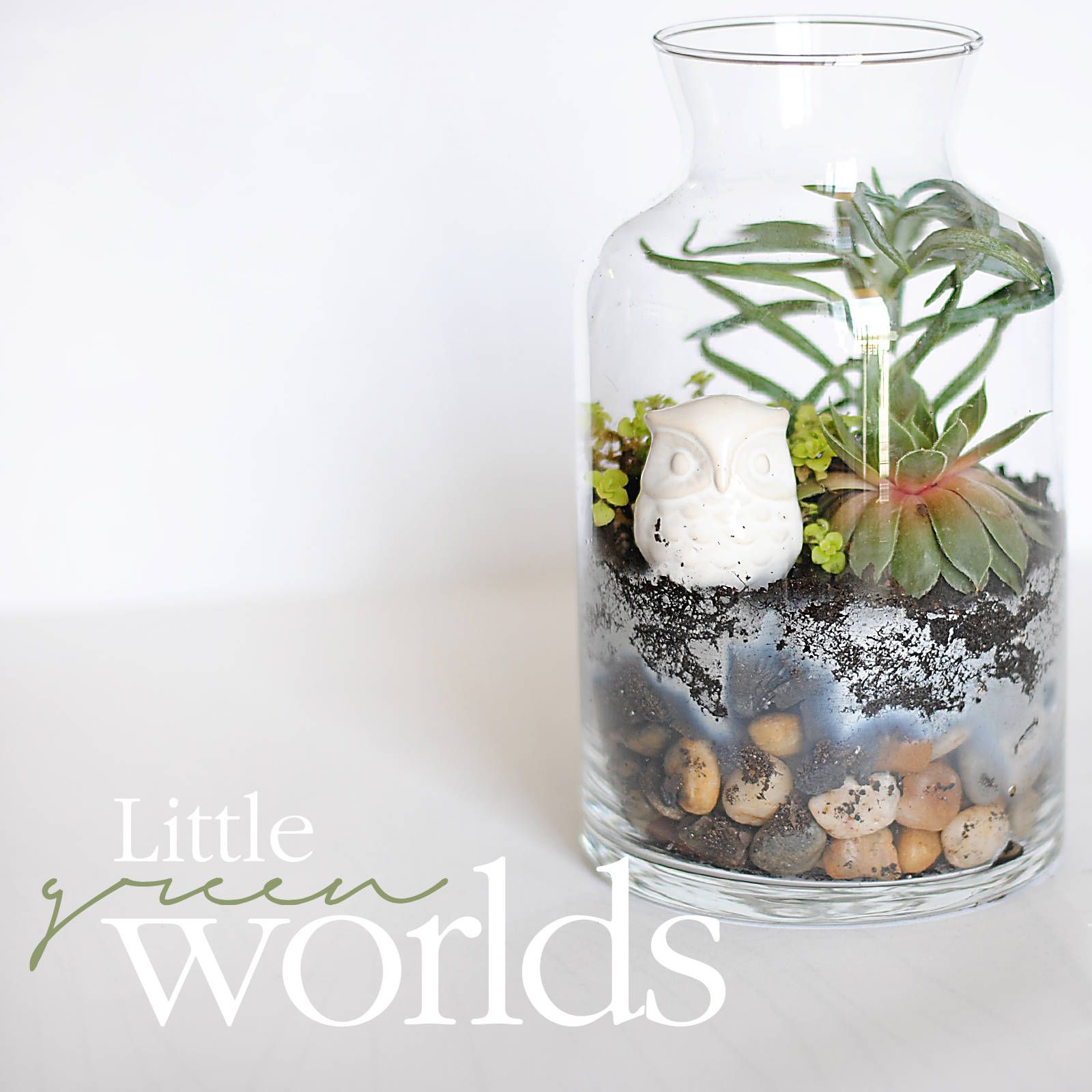 Basic Terrariums #Garden #Home