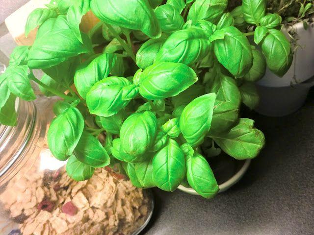 fresh herbs <3