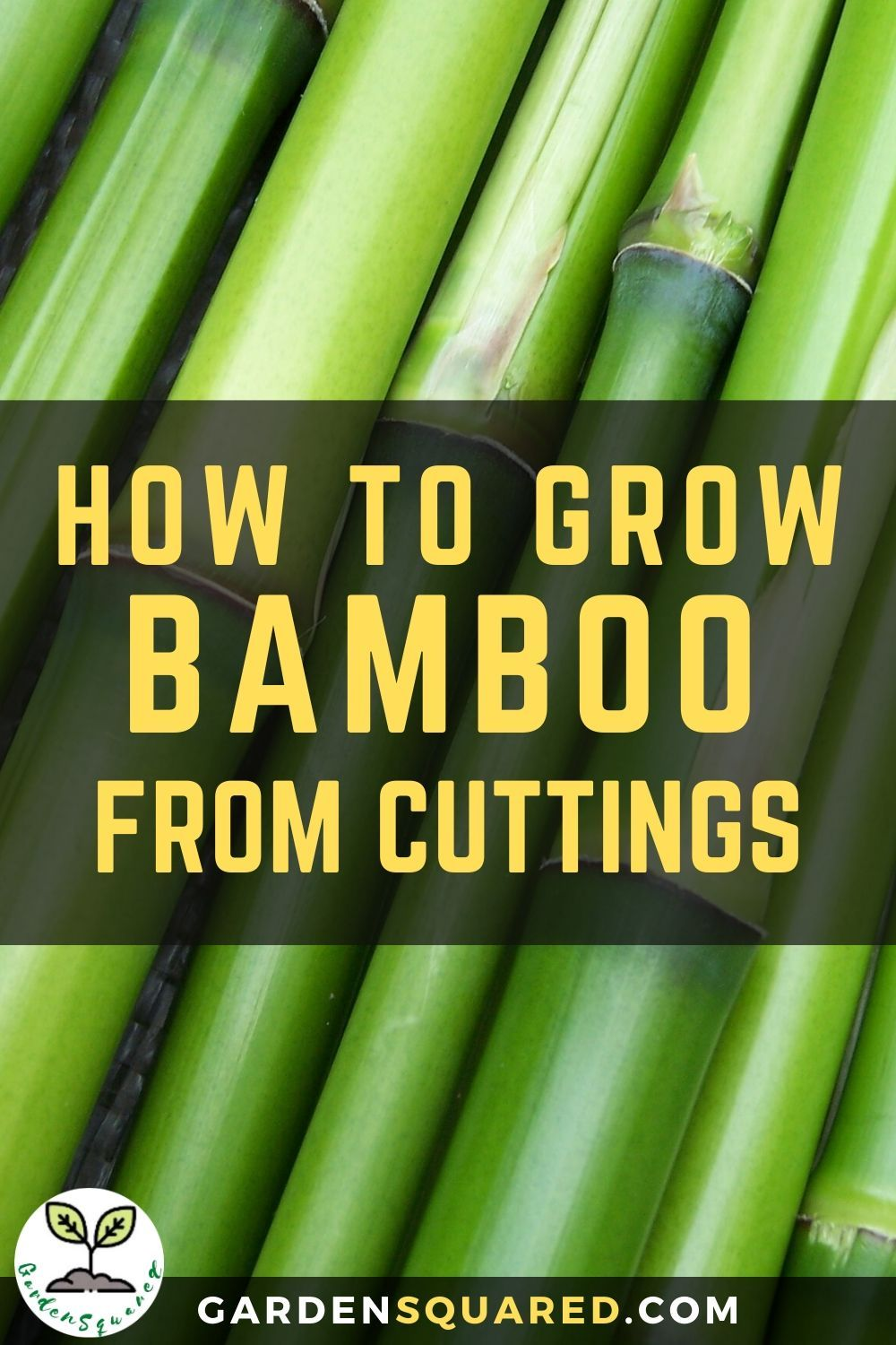 How To Grow Bamboo From Cuttings Growing Bamboo Bamboo Plant Care Lucky Bamboo Plants