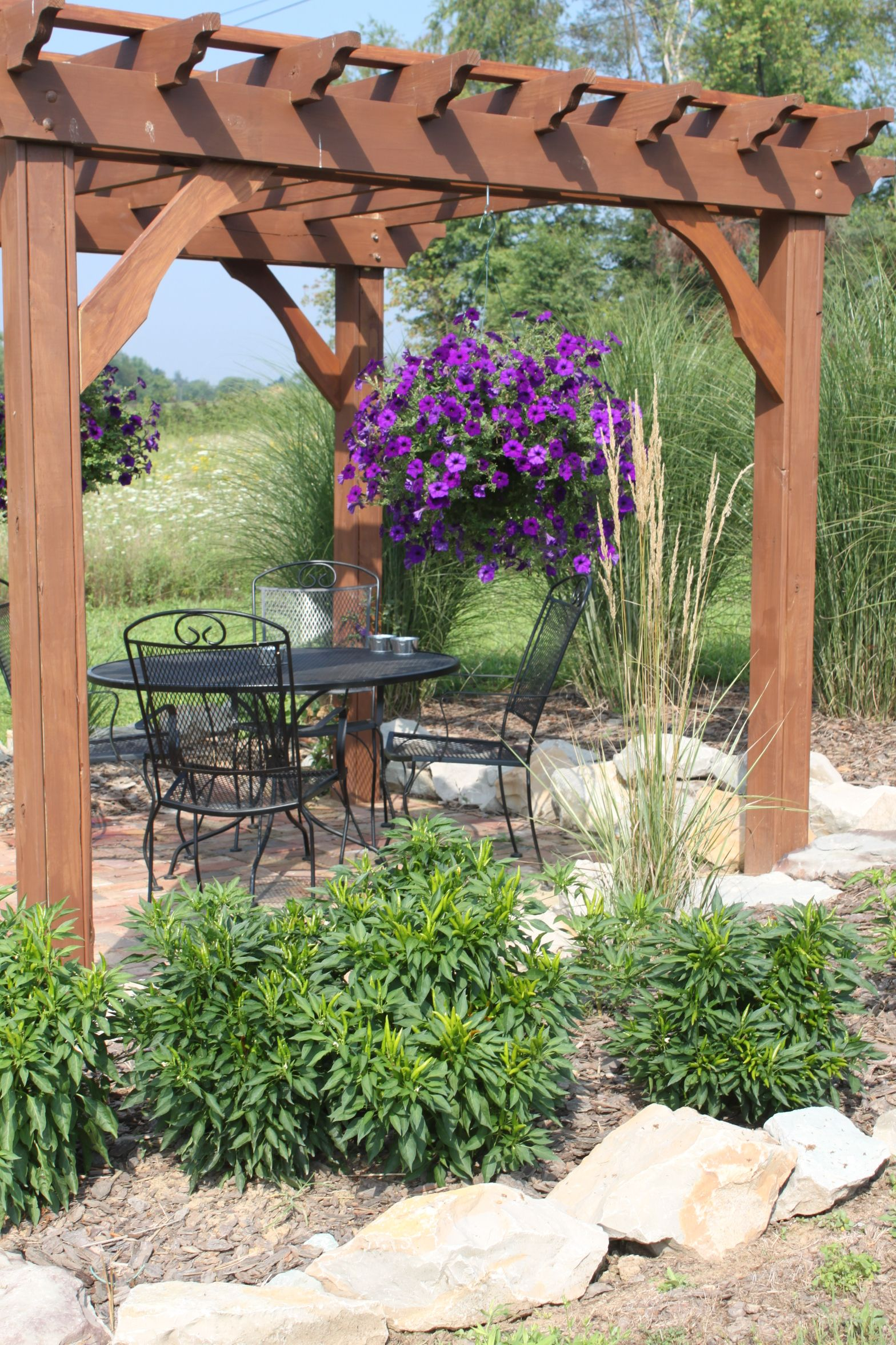 The upper pergola with hanging wave petunia's and poinsettia pepper plants  in the beds - The Farm And Garden In Pictures - August Edition Pergolas, Plants