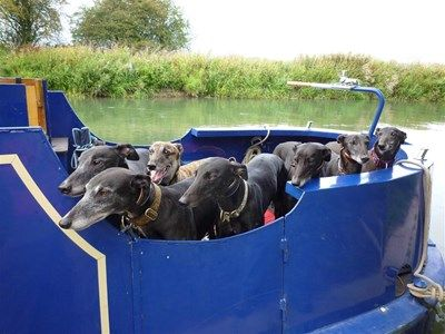 How Many Greyhounds Can You Fit In One Canal Boat Dog Boredom