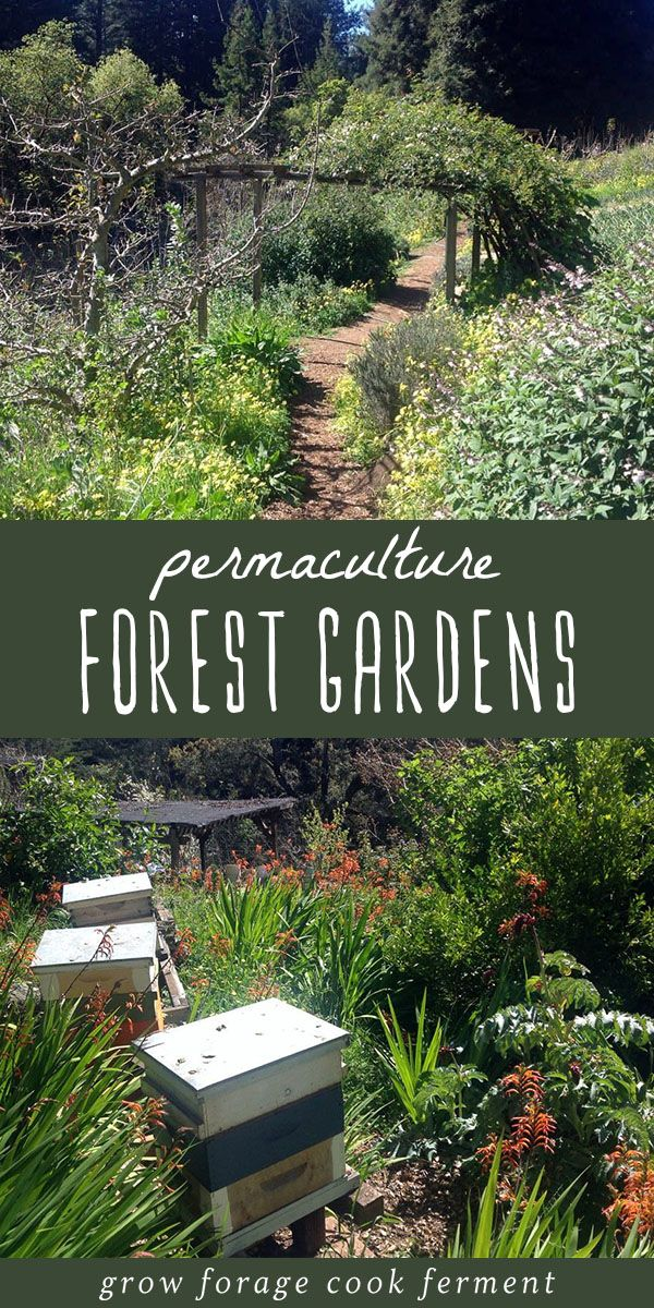 Permaculture 101 What Is A Forest Garden Jardin Forestier