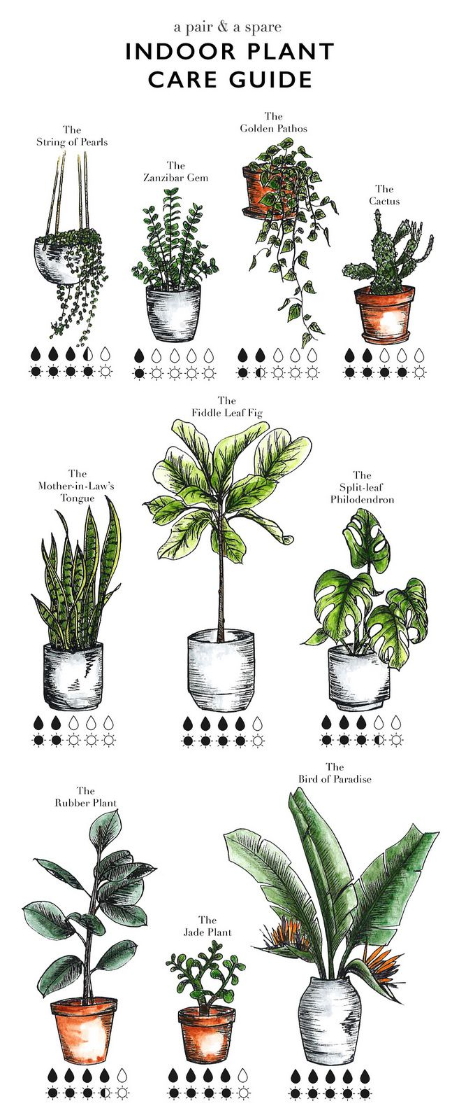 how to care for indoor plants plante d int rieur. Black Bedroom Furniture Sets. Home Design Ideas
