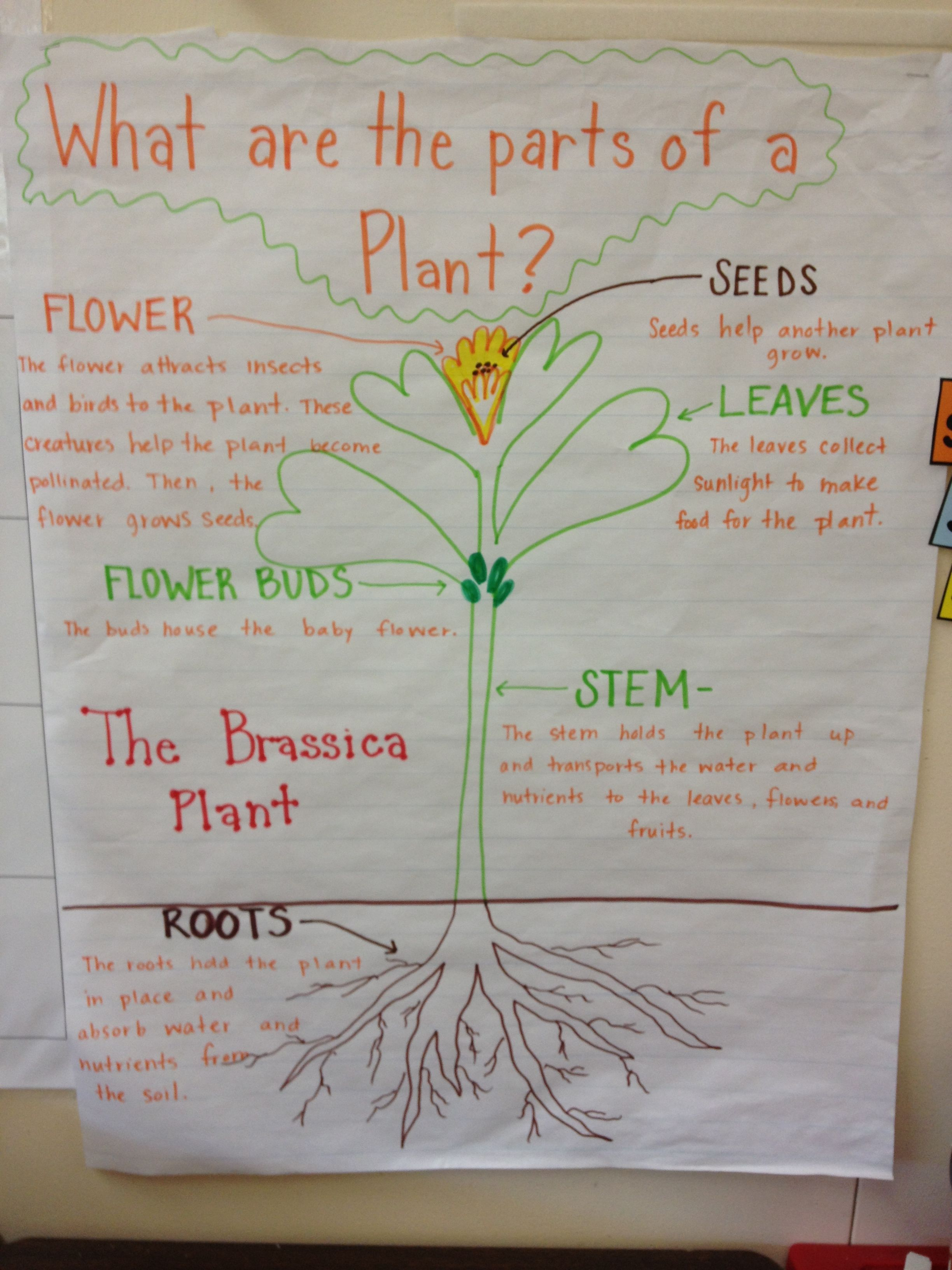 Parts And Functions Of A Plant Plant Science Second Grade Science Teaching Science