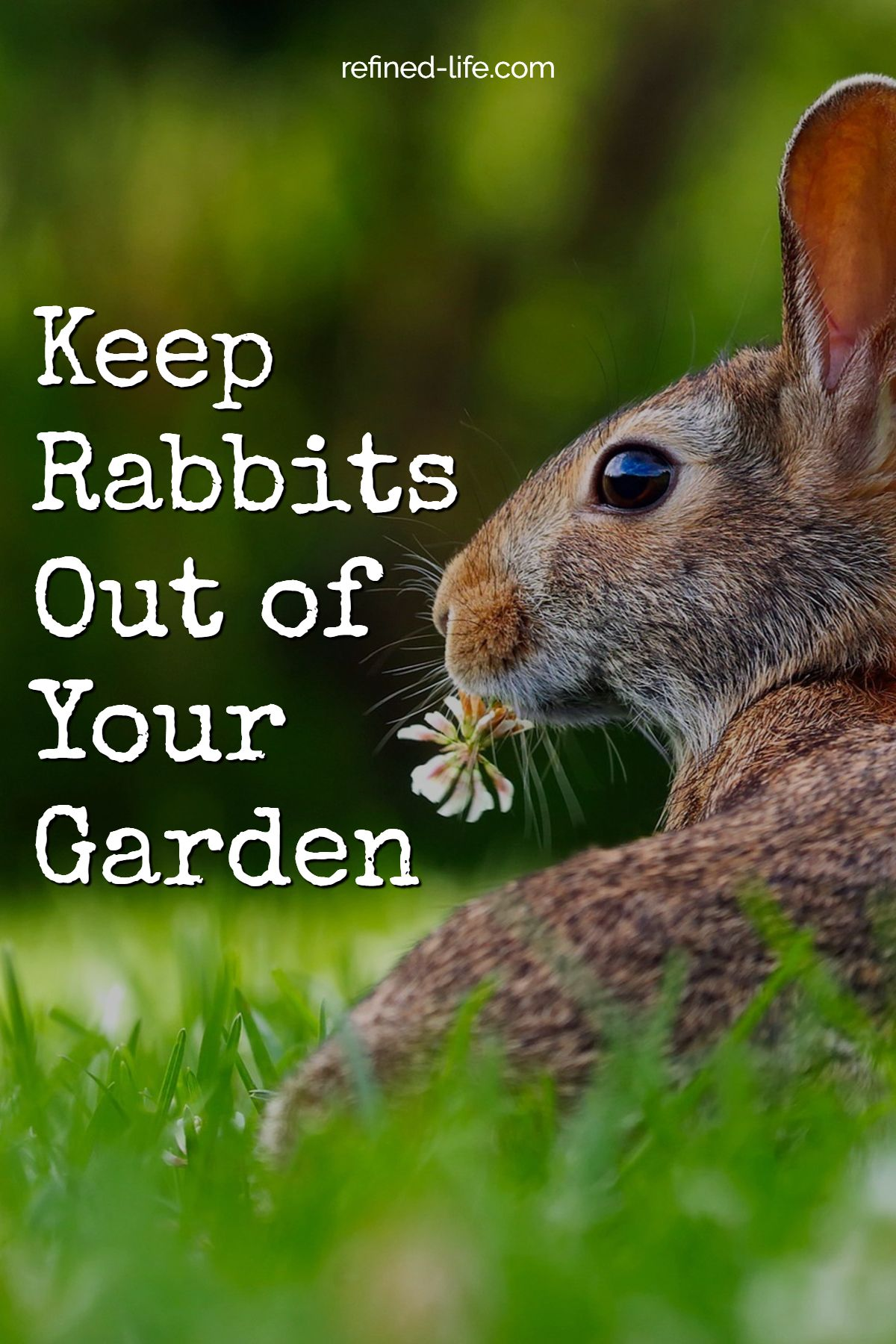 How to Keep Rabbits Out of Your Garden - Rabbit-Resistant ...
