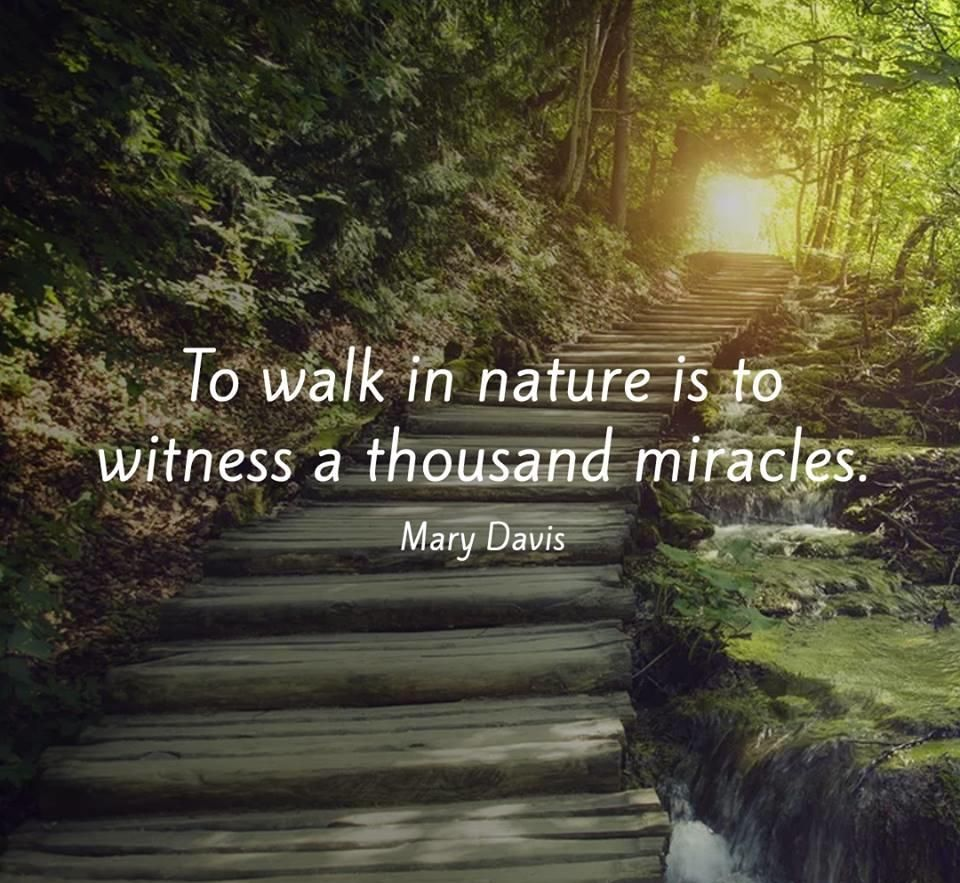 Best Nature Quotes: To Walk In Nature Is To Witness A Thousand Miracles