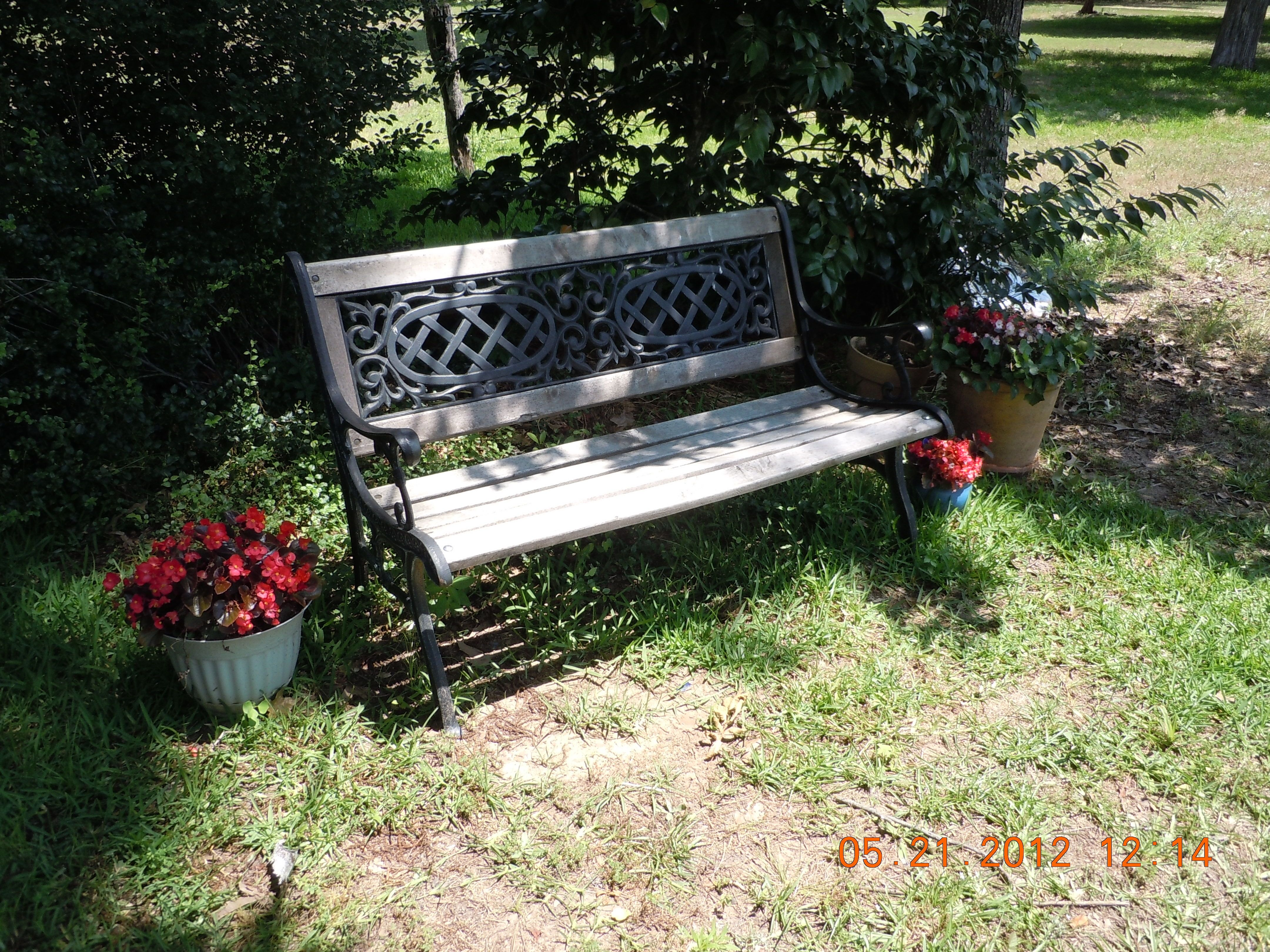 Our park bench in front of our candy stripe camellia.