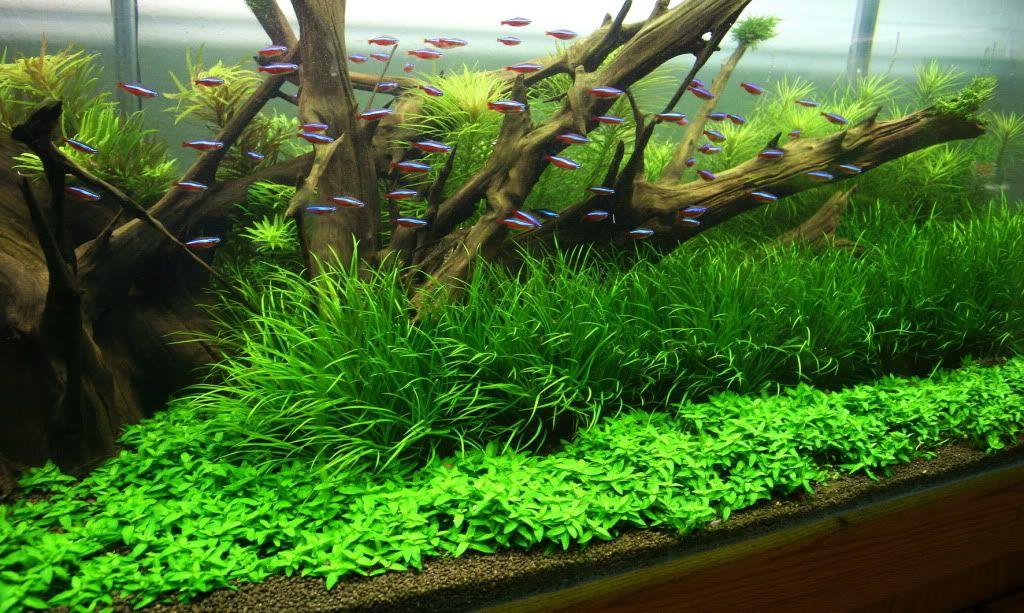 die besten 25 algen im aquarium ideen auf pinterest fisch hintergrund fish clip und aquarium. Black Bedroom Furniture Sets. Home Design Ideas