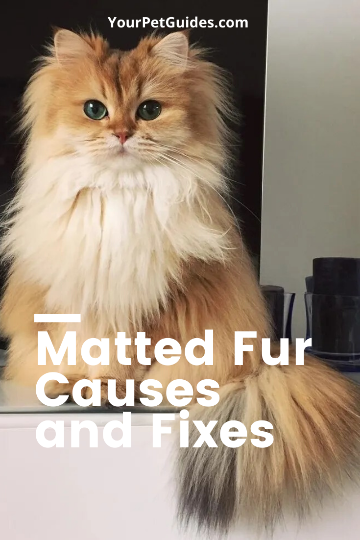 Matting In Cats In 2020 Cats Cat Fur Kitten Health