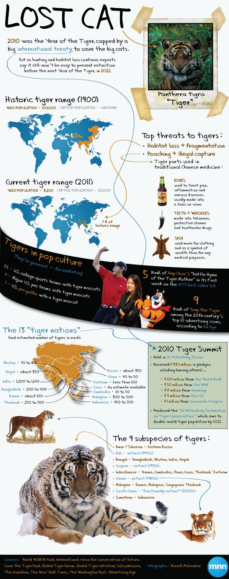 Infographic Troubled tigers Animales en peligro de