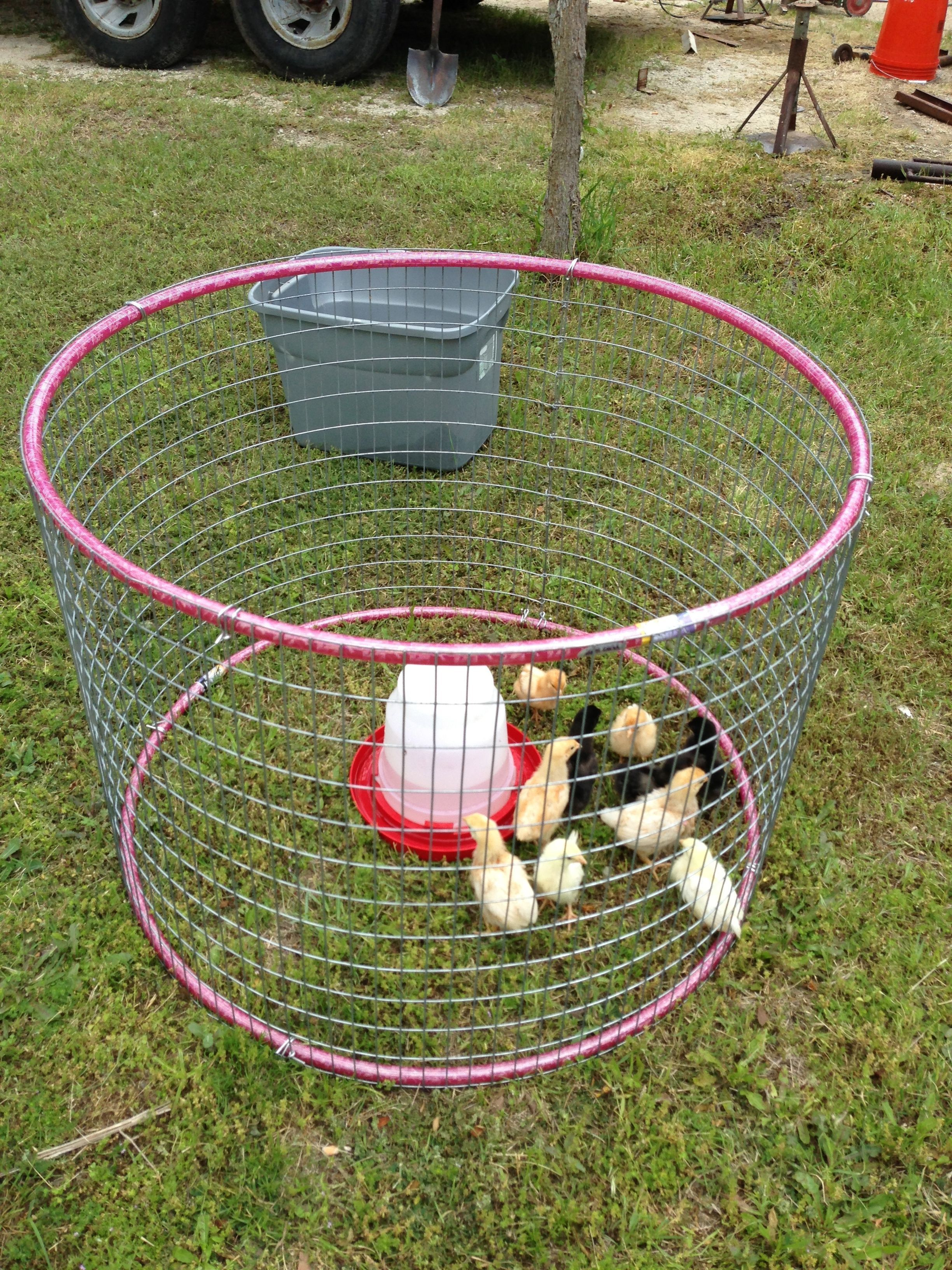 hula hoop chicken tractor is probably about the size I\'d need ...