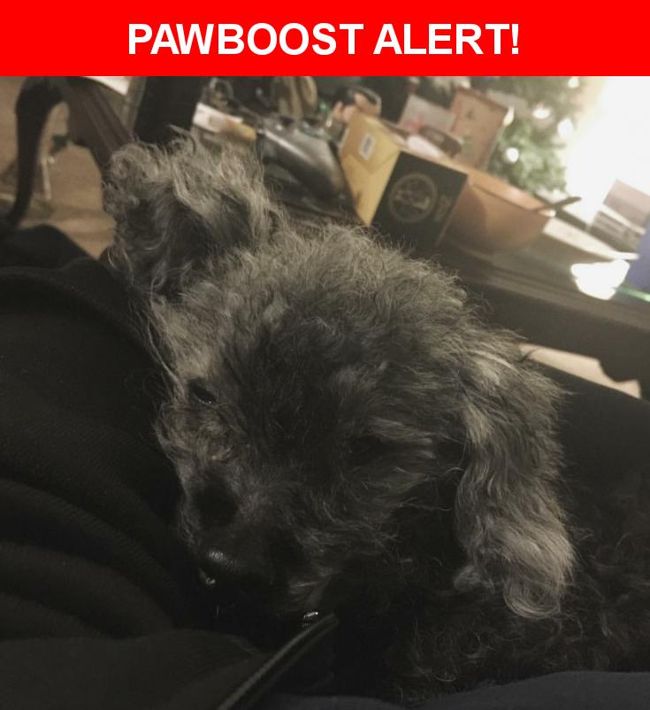 Please spread the word! Pepper was last seen in Wilmington, DE 19805.    Nearest Address: Near W Latimer Pl & Clayton Rd