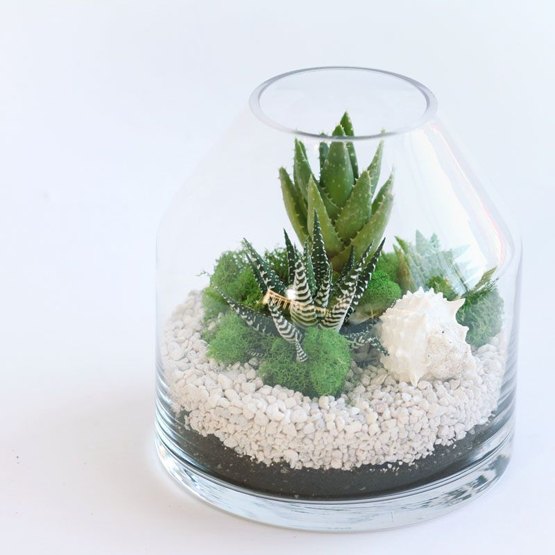 A green gift that keeps on giving!  Wether you want to say Congratulations, Happy Birthday or just Thinking of  You, each piece is unique and created with care.  This Product is not available for Shipping outside Winnipeg.  Details:      * assorted succulents     * available in: